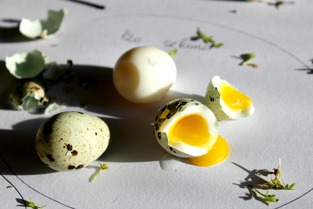 křepelčí vejce vařené 120 s